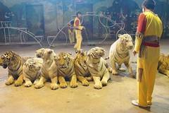 南京紅山動物園